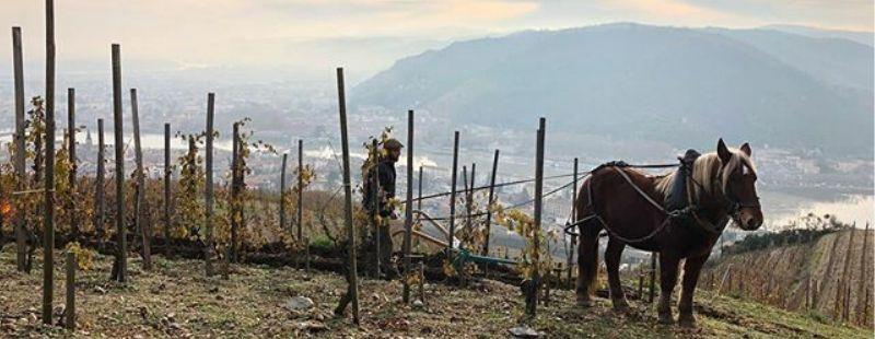 Chapoutier wine horse