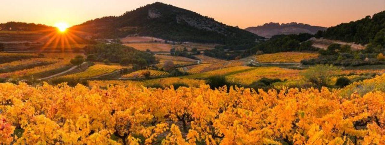 Rhone Valley wine and food pairing tasting